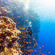 Bonus, mineral sunscreens probably won't harm coral reefs
