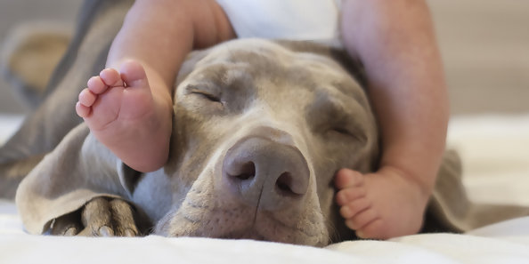 How To Choose A Family Dog